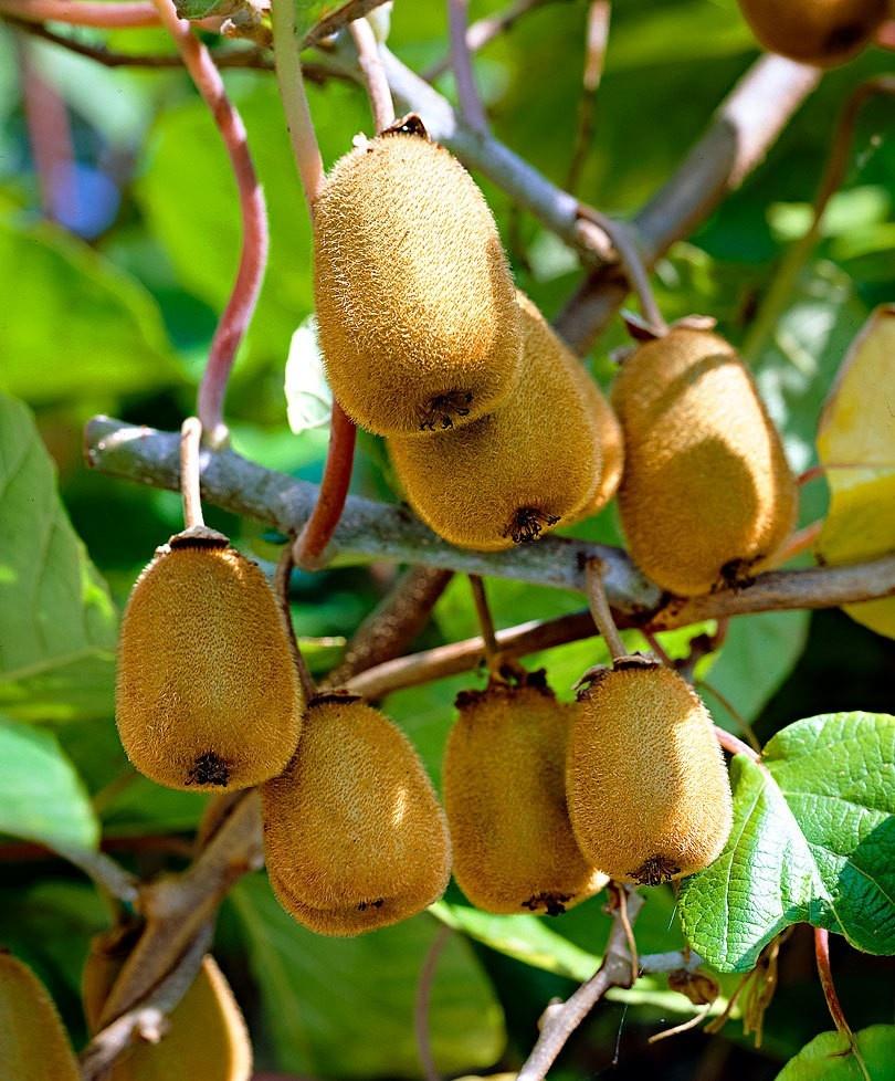 fruit week 48:waspeen (een zakje voor 6 leerlingen1 appel1 kiwi